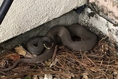 snake by house